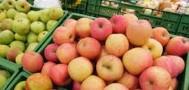 Греческие фрукты не попадут под запрет в России0