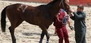 С лошадей Рамзана Кадырова были сняты санкции