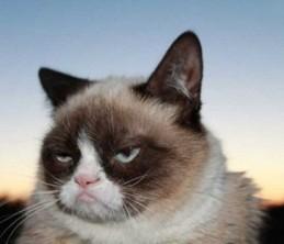 Сердитый кот станет экспонатом галереи мадам Тюссо