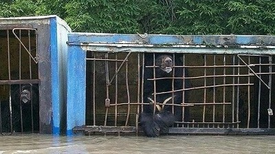 Трутнев потребовал эвакуировать животных из Уссурийска
