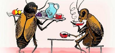 Февраль — время активизации тараканов. Как избавиться от насекомых и защитить дом?